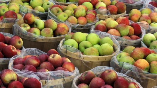 苹果在篮子里的收获