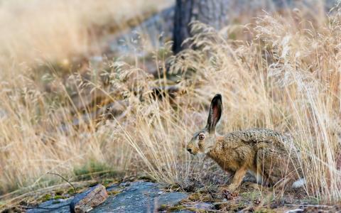 兔子藏在草地里