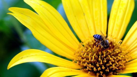 大黄色的花
