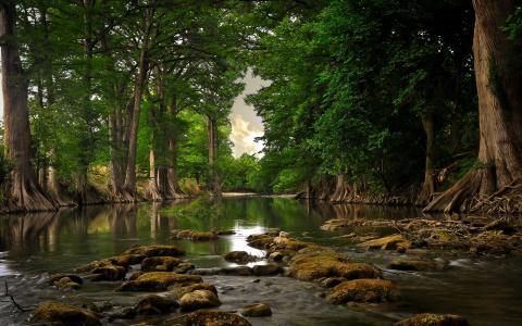 河流和森林