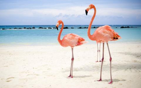 在岸上的粉红色的火烈鸟