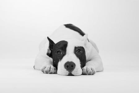 悲伤的狗黑白照片