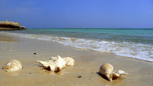 在El Quseir,埃及度假胜地海滩上的贝壳