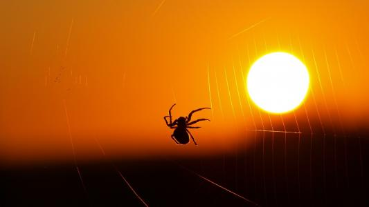 蜘蛛在日落时分