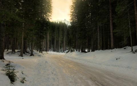 雪,路,在森林里的路