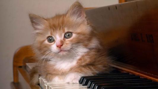猫在钢琴键上