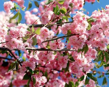 在天空背景上五颜六色的鲜花
