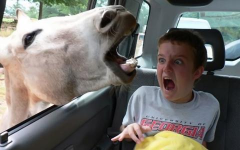 驴吓坏了孩子