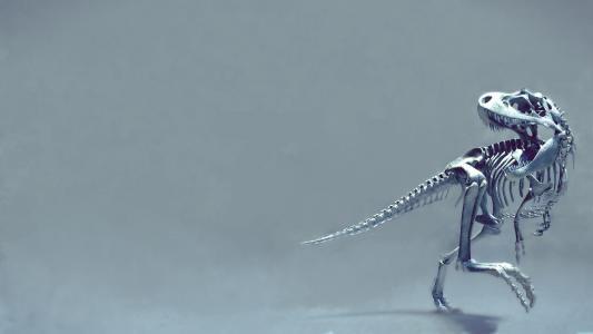 恐龙的骨架