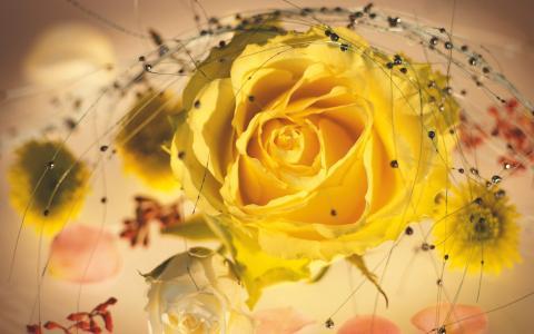黄玫瑰在一束
