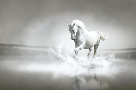 一匹漂亮的白马沿着水流