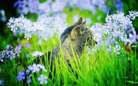 猫在草地上