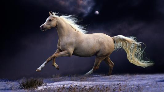 童话般的马