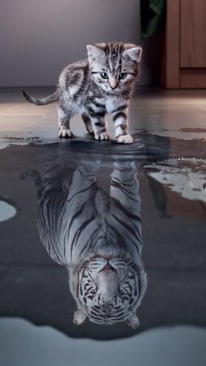 幻想中的孟加拉猫