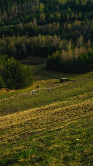 山野森林风景