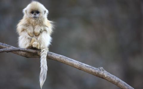 小猴子坐在一个分支