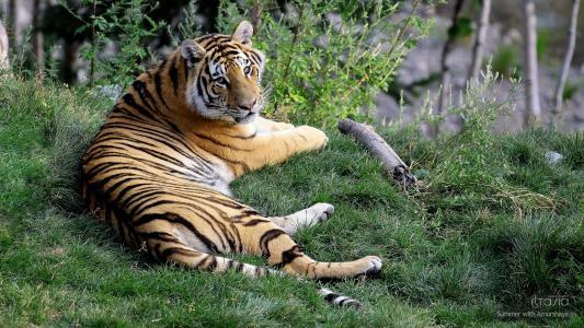 假日母老虎