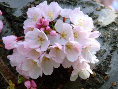 开花的花束