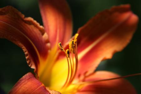 小屋里美丽的百合花