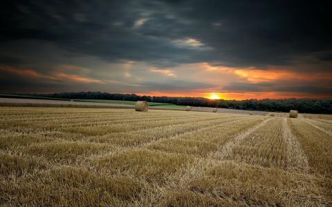 与干草的收获的领域