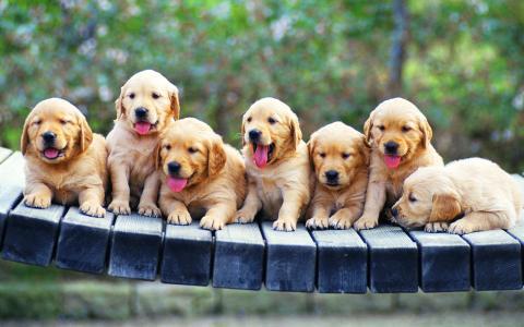 在长凳上的小狗猎犬小狗