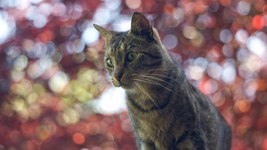 在模糊的灯光背景的家猫