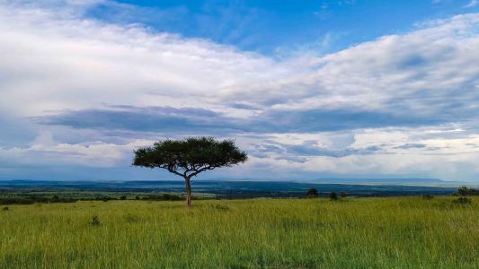 非洲大草原风光
