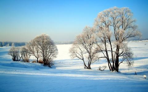在原野中未受伤的雪霜中的树木