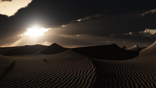孤独的植物在沙漠中