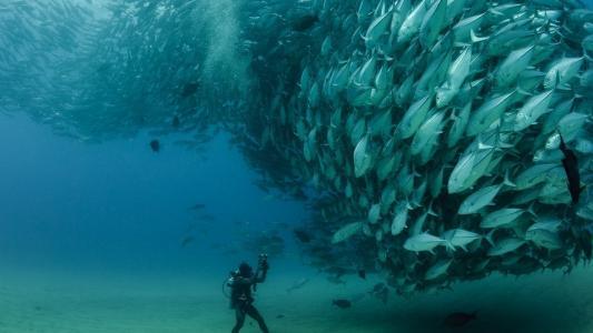 潜水员在海中拍摄鱼