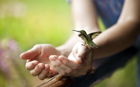 他手臂上的一只小蜂鸟