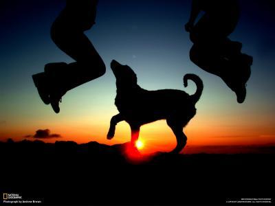 在日落时与一只狗跳舞
