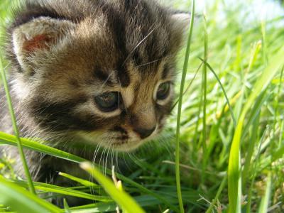 小猫在夏天的草丛中