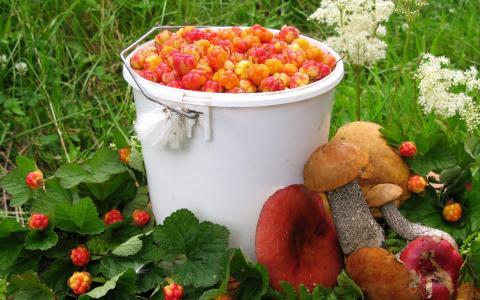 秋天收获的浆果和蘑菇