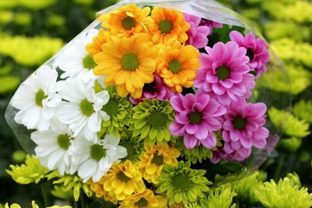 美丽而鲜艳的菊花