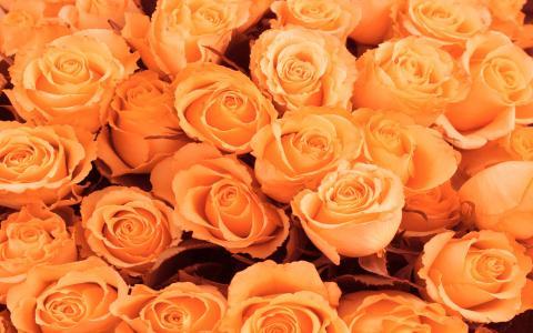 3月8日美丽的花朵