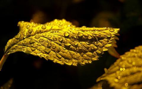 水滴的宏观照片在一片绿色叶子的