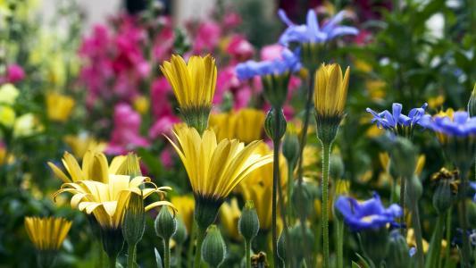 黄色蓝色和粉红色的花朵