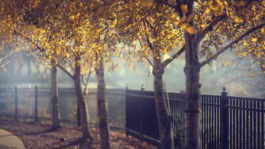 在伪造的篱芭秋天树的胡同