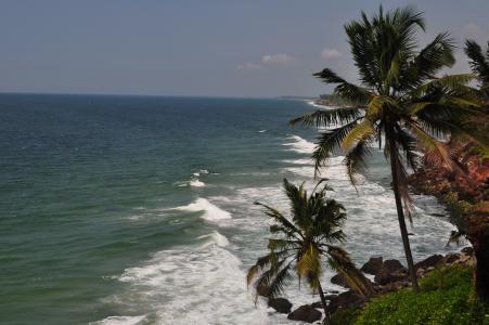 瓦卡拉海岸的棕榈树