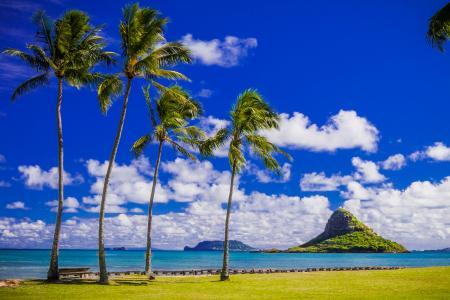 棕榈树在海岸下美丽的蓝天白云,夏威夷。