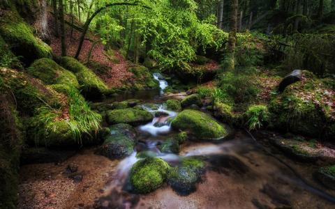 清理树林中的森林溪流