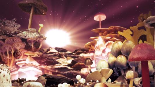 从蘑菇的幻想