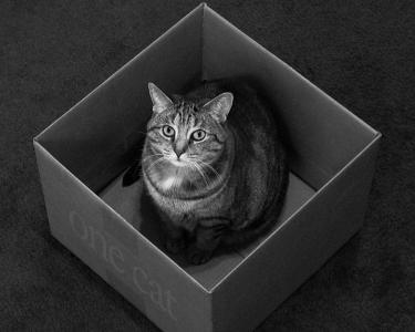 一只猫的盒子