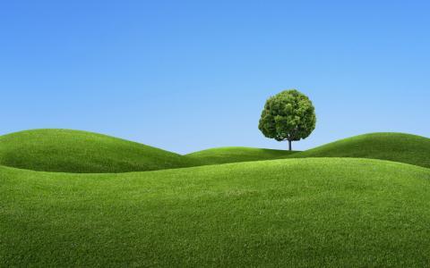 在一座绿色的小山上的树