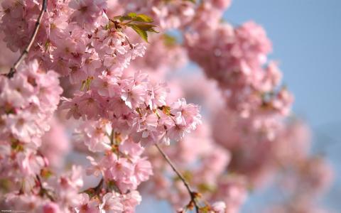 树在春天开花