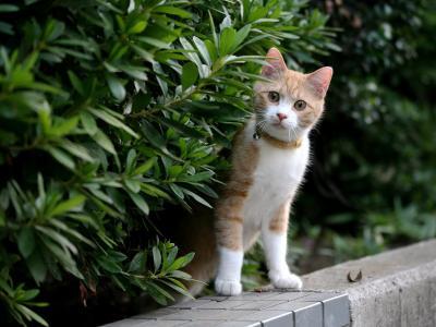 红头发的小猫