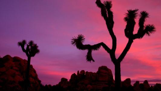 加州国家公园日落