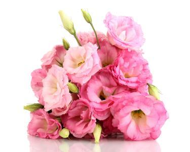 由洋桔梗在白色背景上的粉红色花朵的美丽花束