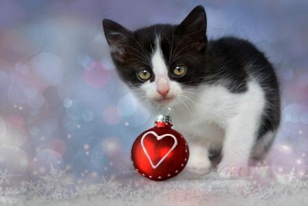 与一个红色圣诞节球在牙齿的小猫